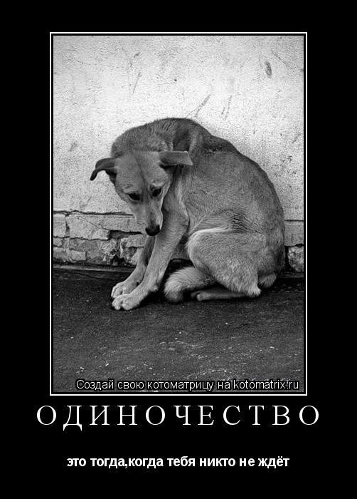 Котоматрица: Одиночество это тогда,когда тебя никто не ждёт