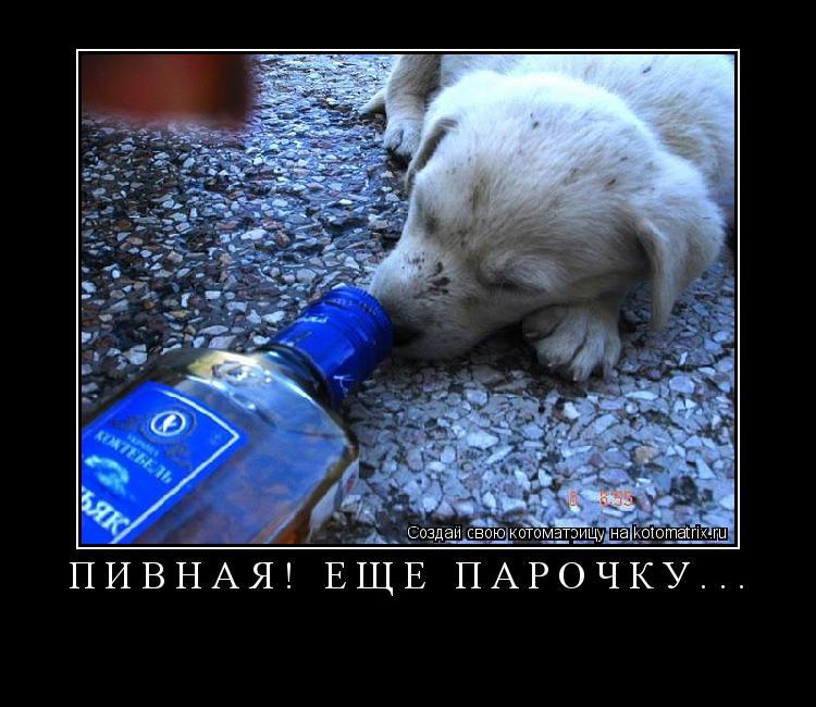 Котоматрица: Пивная! Ещё парочку...