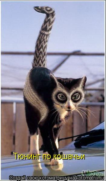 Котоматрица: Тюнинг по кошачьи