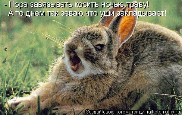 Котоматрица: - Пора завязывать косить ночью траву! А то днем так зеваю,что уши закладывает!