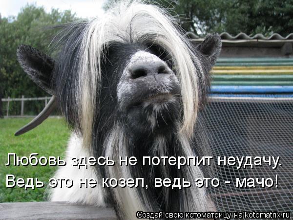 Котоматрица: Любовь здесь не потерпит неудачу. Ведь это не козел, ведь это - мачо!