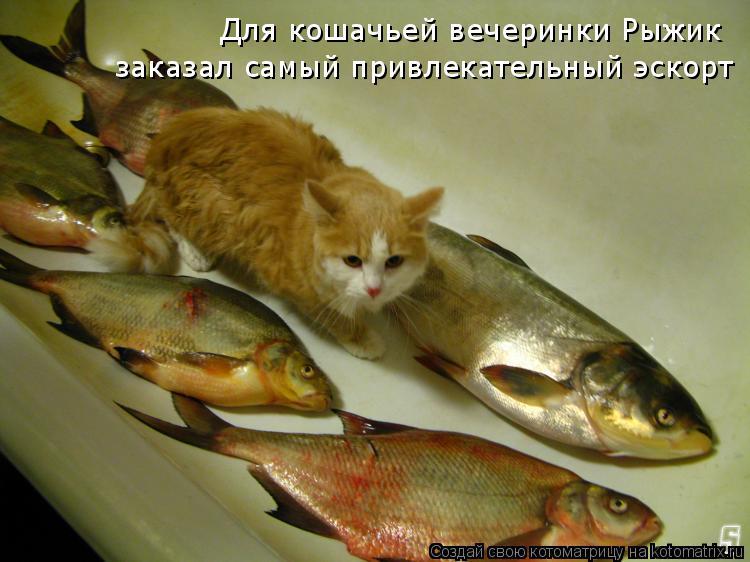 Котоматрица: Для кошачьей вечеринки Рыжик заказал самый привлекательный эскорт