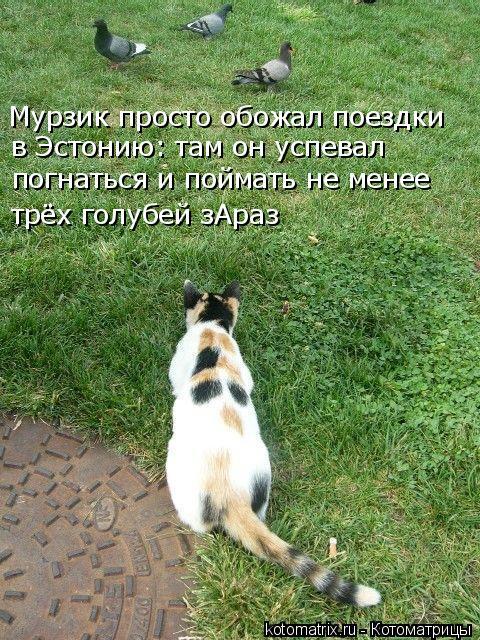 Котоматрица: Мурзик просто обожал поездки в Эстонию: там он успевал погнаться и поймать не менее трёх голубей зАраз