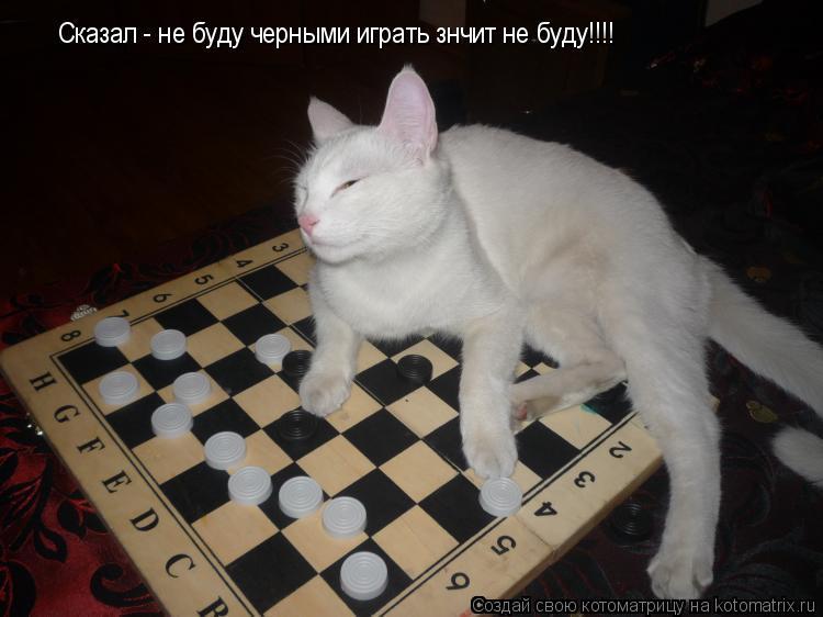 Котоматрица: Сказал - не буду черными играть знчит не буду!!!! Сказал - не буду черными играть знчит не буду!!!! Сказал - не буду черными играть знчит не буду!!
