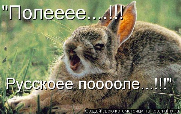 """Котоматрица: """"Полееее....!!! Русскоее пооооле...!!!"""""""