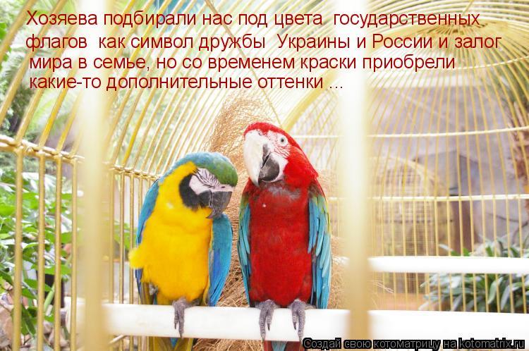 Котоматрица: Хозяева подбирали нас под цвета  государственных  флагов  как символ дружбы  Украины и России и залог  мира в семье, но со временем краски пр
