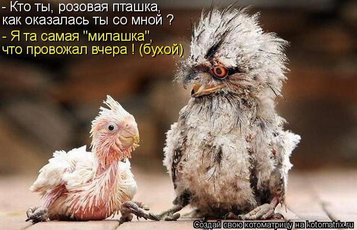 """Котоматрица: - Я та самая """"милашка"""", - Кто ты, розовая пташка, как оказалась ты со мной ? что провожал вчера ! (бухой)"""
