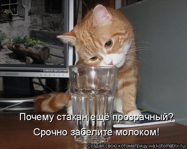 Котоматрица: Почему стакан ещё прозрачный? Срочно забелите молоком!