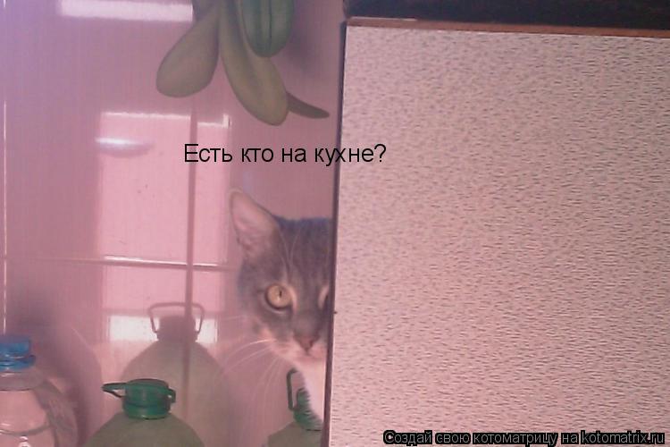 Котоматрица: Есть кто на кухне?