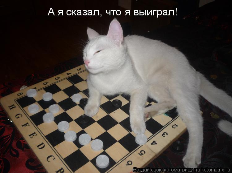 Котоматрица: А я сказал, что я выиграл!