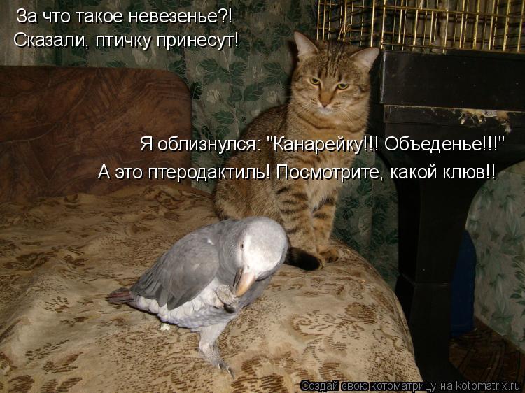 """Котоматрица: За что такое невезенье?! Сказали, птичку принесут! Я облизнулся: """"Канарейку!!! Объеденье!!!"""" А это птеродактиль! Посмотрите, какой клюв!!"""