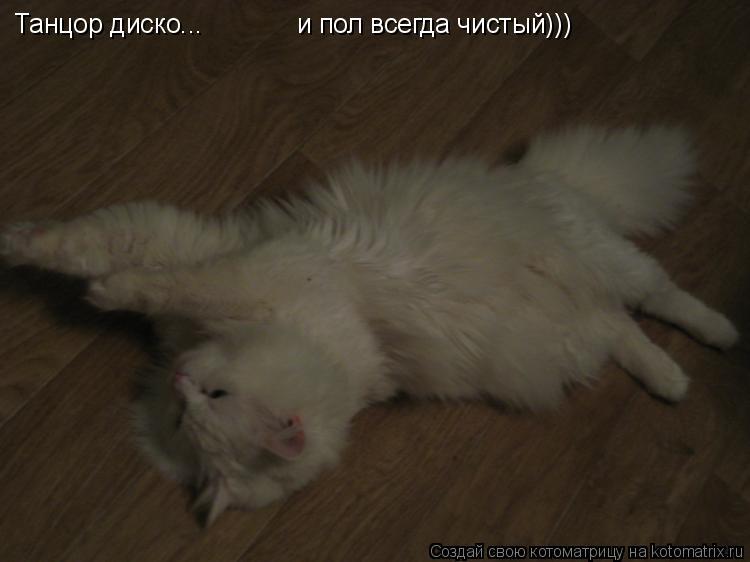 Котоматрица: Танцор диско... и пол всегда чистый)))