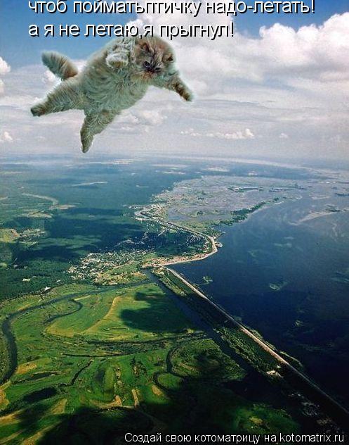 Котоматрица: чтоб пойматьптичку надо-летать! а я не летаю,я прыгнул!