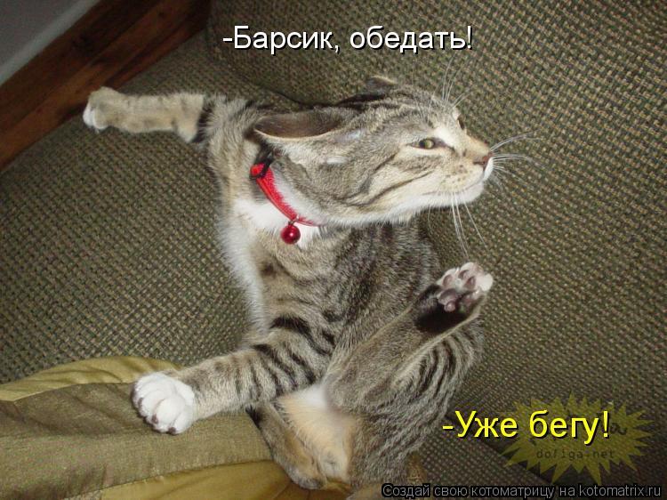 Котоматрица: -Барсик, обедать! -Уже бегу!