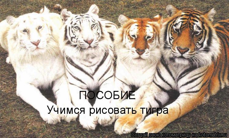 Котоматрица: ПОСОБИЕ Учимся рисовать тигра