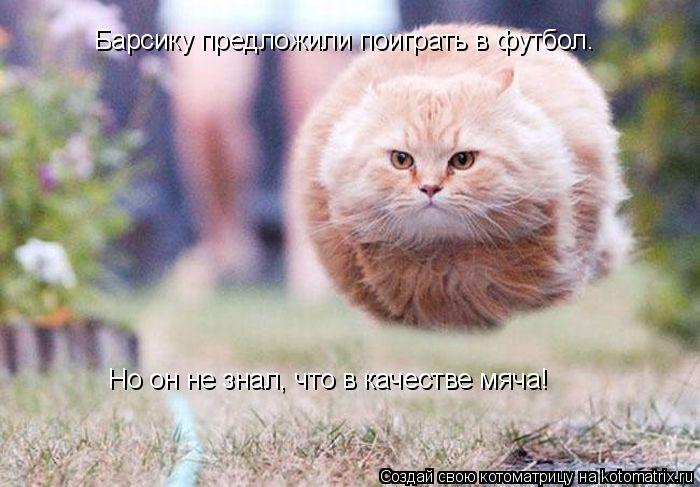 Котоматрица: Барсику предложили поиграть в футбол. Но он не знал, что в качестве мяча!