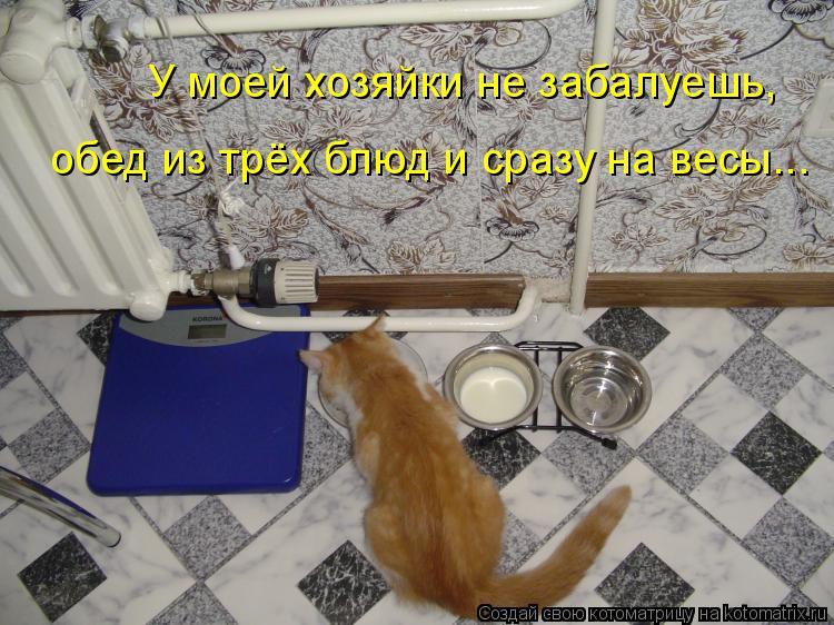 Котоматрица: У моей хозяйки не забалуешь, обед из трёх блюд и сразу на весы...