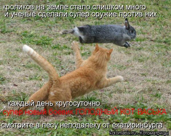 Котоматрица: кроликов на земле стало слишком много и ученые сделали супер оружие против них... каждый день кругосуточно  смотрите в лесу неподалеку от ек
