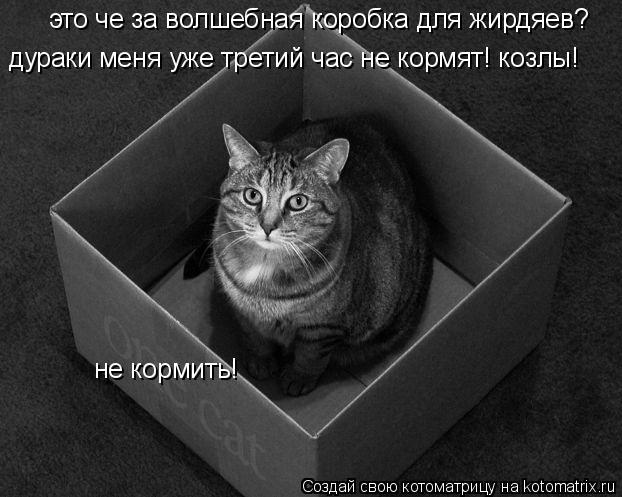 Котоматрица: не кормить! это че за волшебная коробка для жирдяев? дураки меня уже третий час не кормят! козлы!
