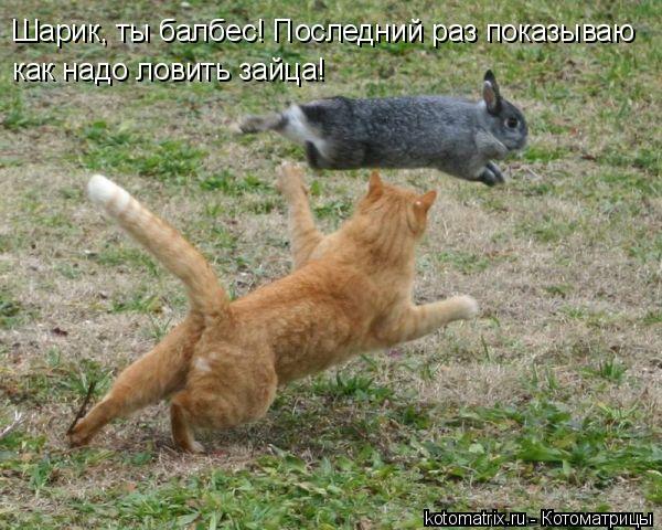 Котоматрица: Шарик, ты балбес! Последний раз показываю как надо ловить зайца!