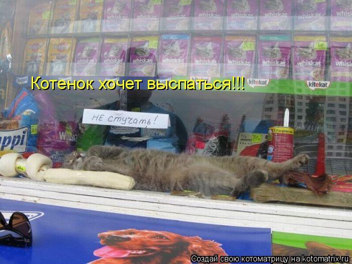 Котоматрица: Котенок хочет выспаться!!!