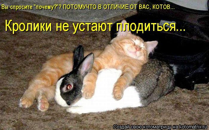 """Котоматрица: Вы спросите """"почему?""""? ПОТОМУЧТО В ОТЛИЧИЕ ОТ ВАС, КОТОВ... Кролики не устают плодиться..."""