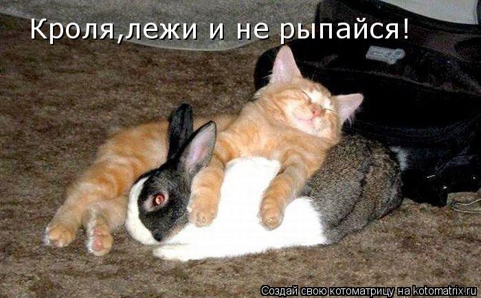 Котоматрица: Кроля,лежи и не рыпайся! Тут люди спать пытаются!