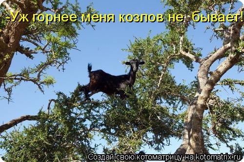 Котоматрица: -Уж горнее меня козлов не  бывает!