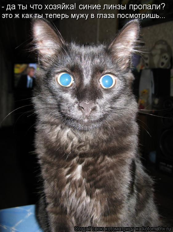 Котоматрица: - да ты что хозяйка! синие линзы пропали? это ж как ты теперь мужу в глаза посмотришь...