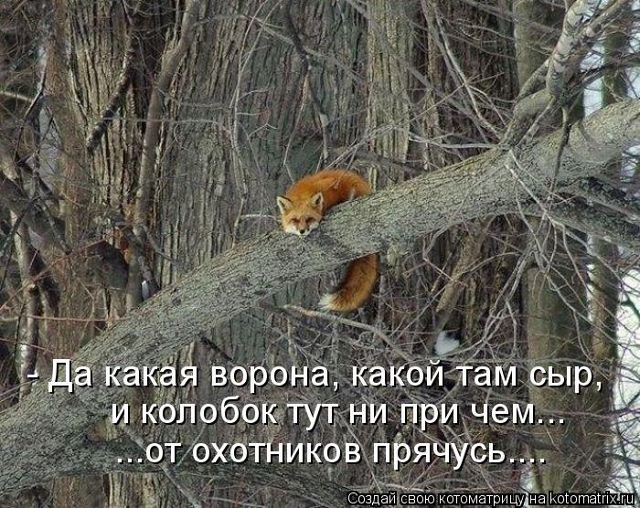 Котоматрица: - Да какая ворона, какой там сыр,  и колобок тут ни при чем... ...от охотников прячусь....