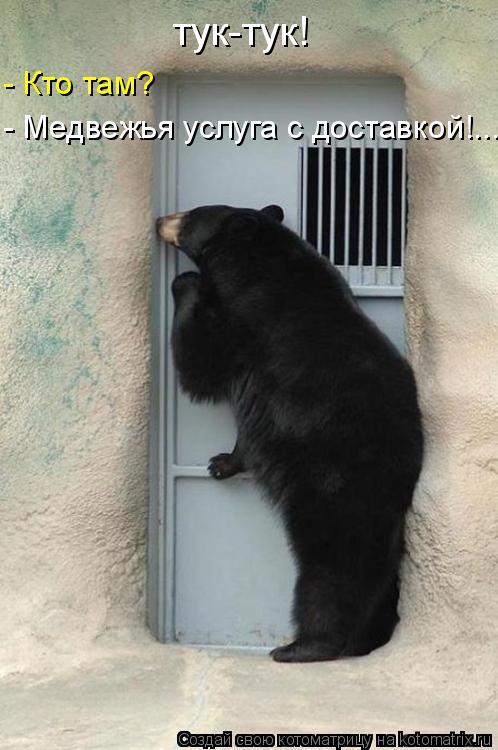 Котоматрица: тук-тук! - Медвежья услуга с доставкой!... - Кто там?