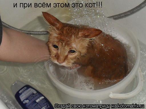Котоматрица: и при всём этом это кот!!!
