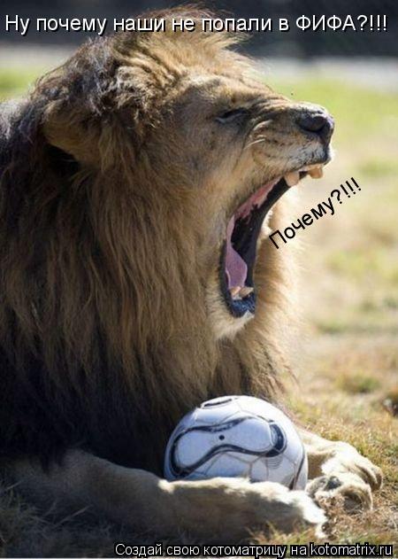 Котоматрица: Ну почему наши не попали в ФИФА?!!! Почему?!!! Почему?!!!