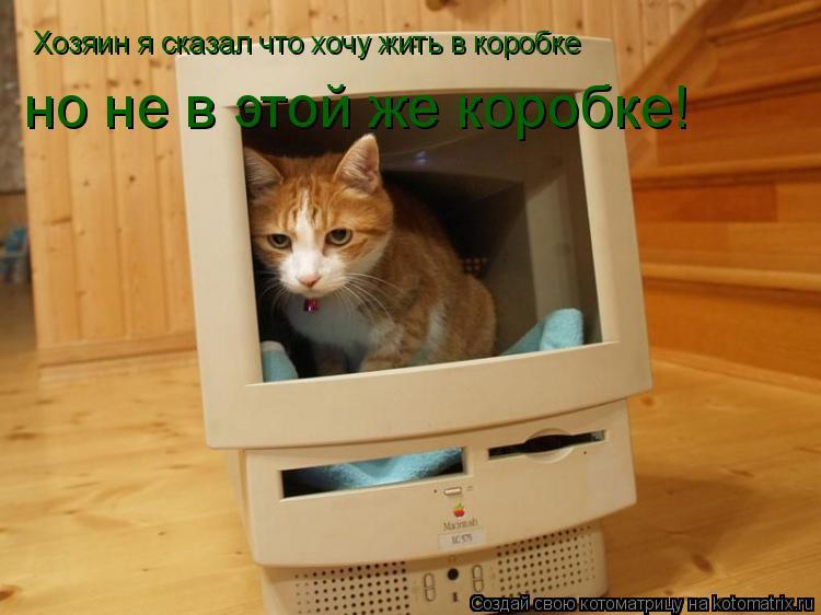 Котоматрица: Хозяин я сказал что хочу жить в коробке но не в этой же коробке!