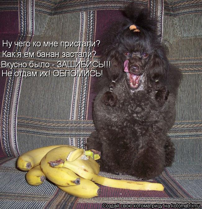 Котоматрица: Ну чего ко мне пристали? Как я ем банан застали? Вкусно было - ЗАШИБИСЬ!!! Не отдам их! ОБЛОМИСЬ!