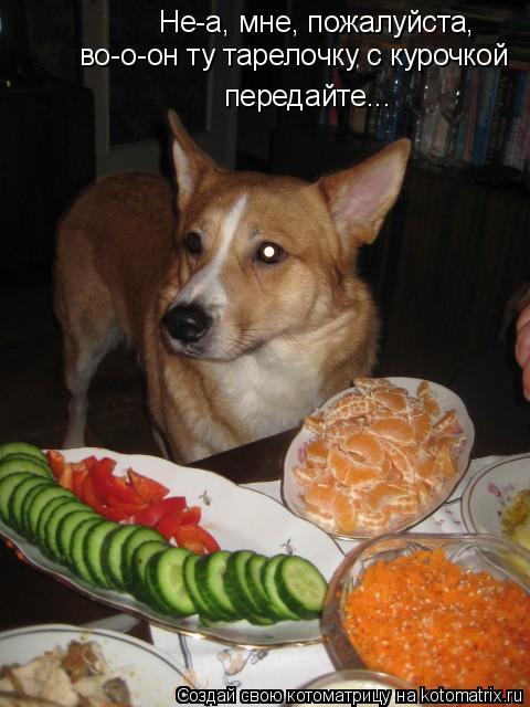 Котоматрица: Не-а, мне, пожалуйста, во-о-он ту тарелочку с курочкой передайте...