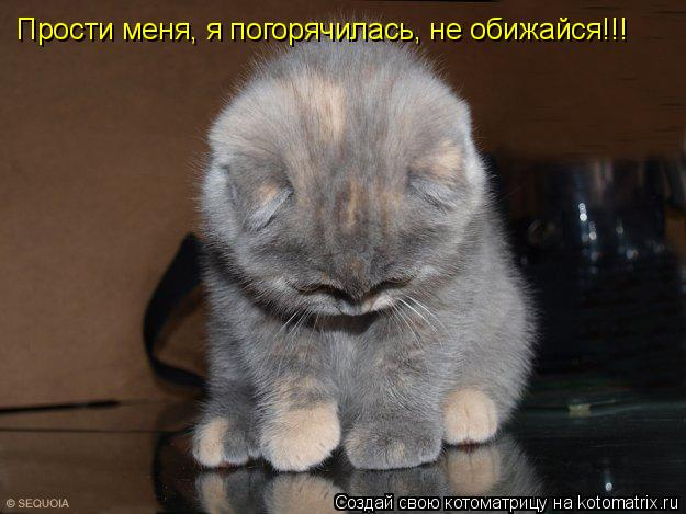 Котоматрица: Прости меня, я погорячилась, не обижайся!!!