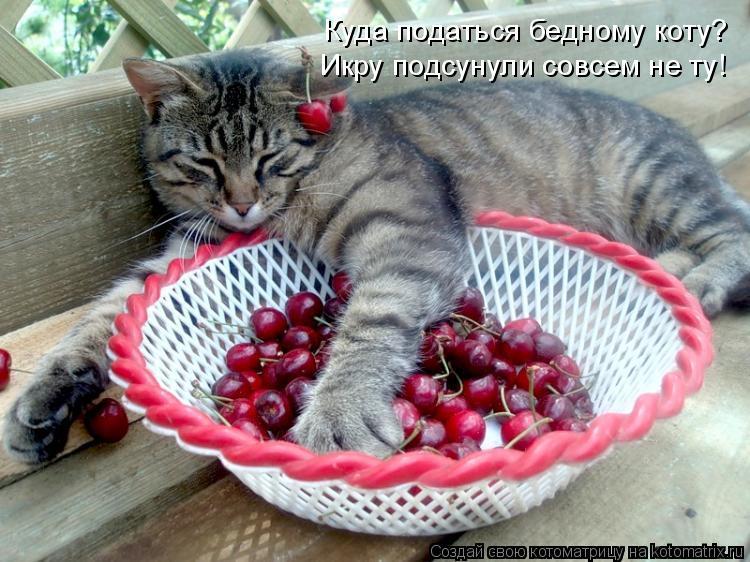 Котоматрица: Куда податься бедному коту? Икру подсунули совсем не ту!