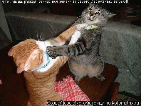 Котоматрица: я те , мышь рыжая, сейчас все зеньки за своего Сереженьку выбью!!!