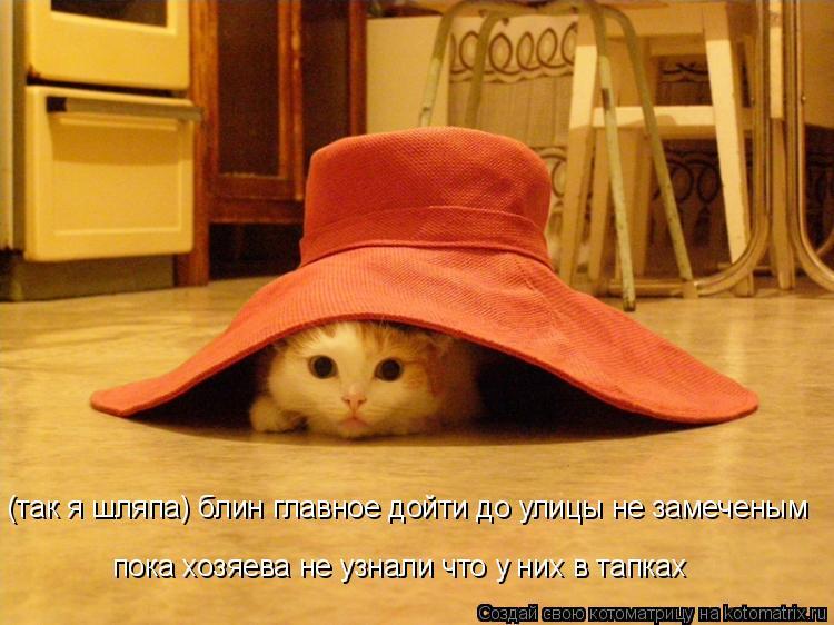 Котоматрица: (так я шляпа) блин главное дойти до улицы не замеченым пока хозяева не узнали что у них в тапках