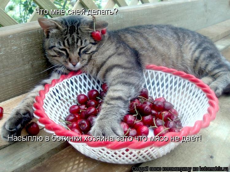 Котоматрица: Что мне сней делать? Насыплю в ботинки хозяина зато что мясо не даёт!