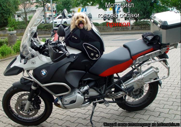Котоматрица: Мотоцикл + голова собаки = прикол