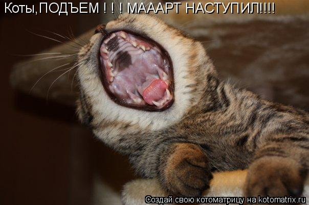 Котоматрица: Коты,ПОДЪЕМ ! ! ! МАААРТ НАСТУПИЛ!!!!