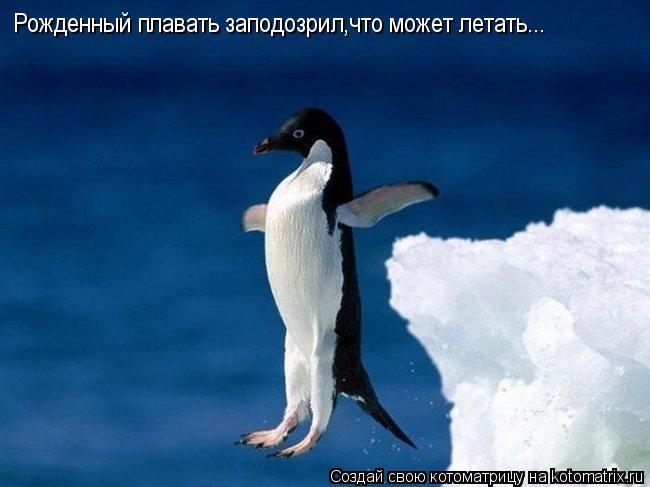 Котоматрица: Рожденный плавать заподозрил,что может летать...