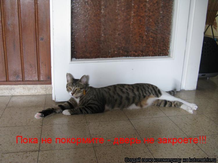 Котоматрица: Пока не покормите - дверь не закроете!!!