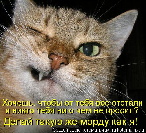 Котоматрица: Хочешь, чтобы от тебя все отстали и никто тебя ни о чем не просил? Делай такую же морду как я!