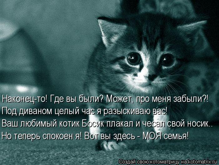 Котоматрица: Наконец-то! Где вы были? Может, про меня забыли?! Ваш любимый котик Босик плакал и чесал свой носик.. Но теперь спокоен я! Вот вы здесь - МОЯ сем