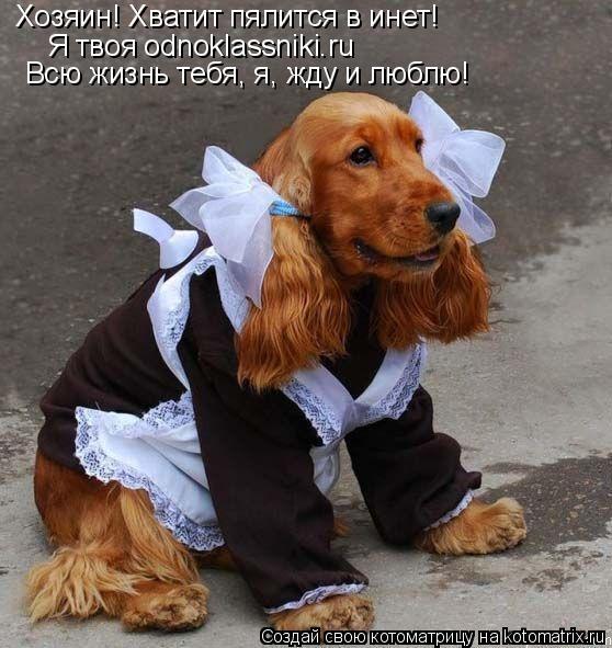 Котоматрица: Хозяин! Хватит пялится в инет! Я твоя odnoklassniki.ru Всю жизнь тебя, я, жду и люблю!