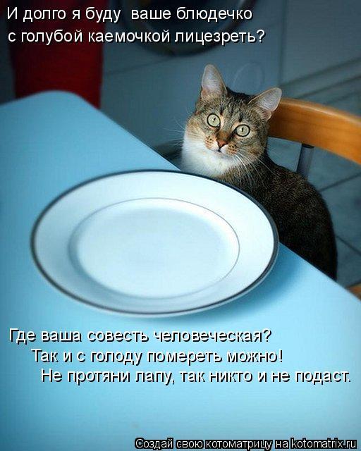 Котоматрица: И долго я буду  ваше блюдечко   с голубой каемочкой лицезреть? Где ваша совесть человеческая? Так и с голоду помереть можно! Не протяни лапу,