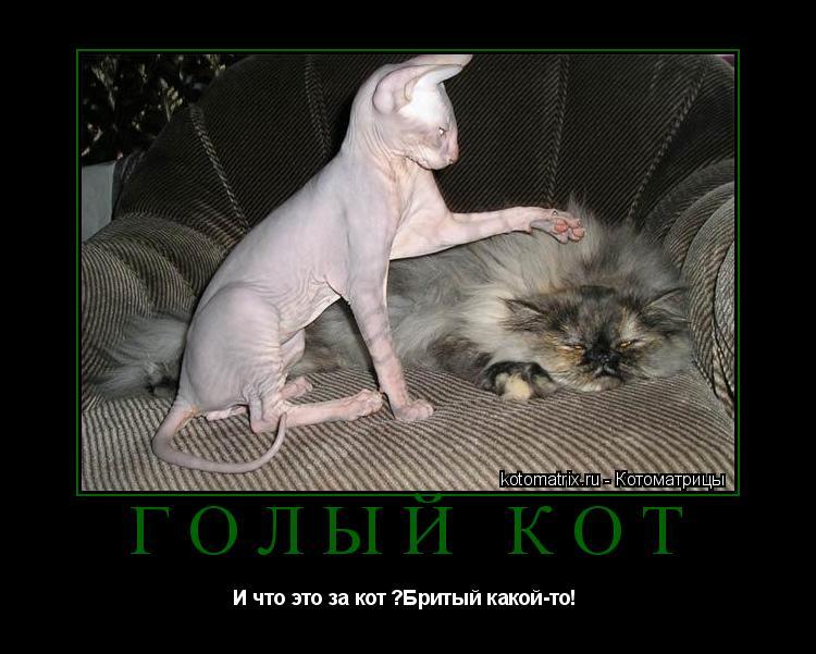 Котоматрица: Голый кот И что это за кот ?Бритый какой-то!
